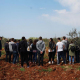 Olive pruning workshop2017